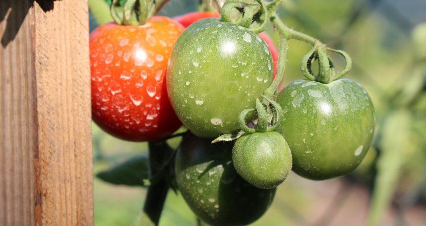 productos agroquímicos más utilizados