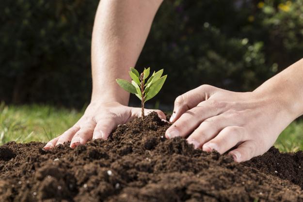 mantenimiento preventivo de cultivos