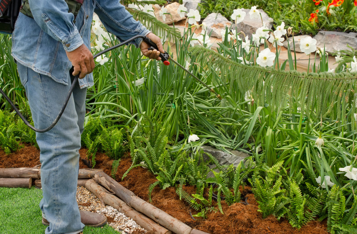 para que sirve el azufre en las plantas