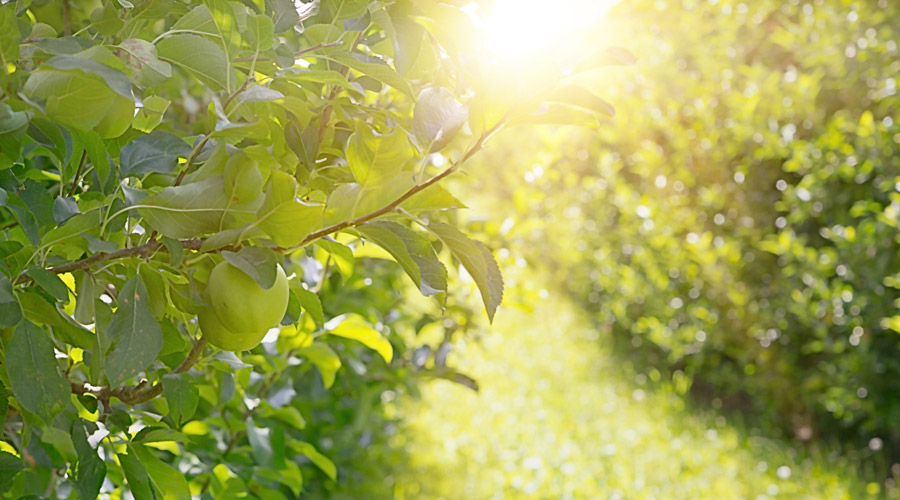 Nutrientes y otros - Productos AJF
