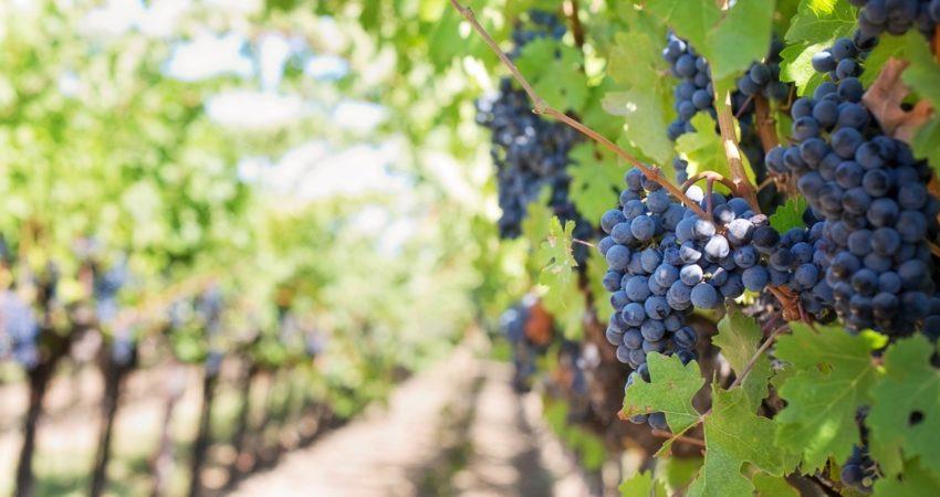 Productos de azufre para viñas