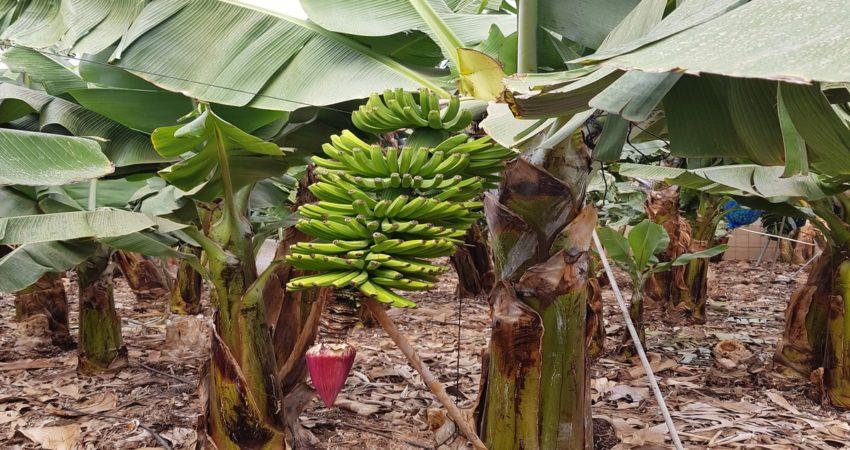 Usos para cultivos tropicales y subtropicales