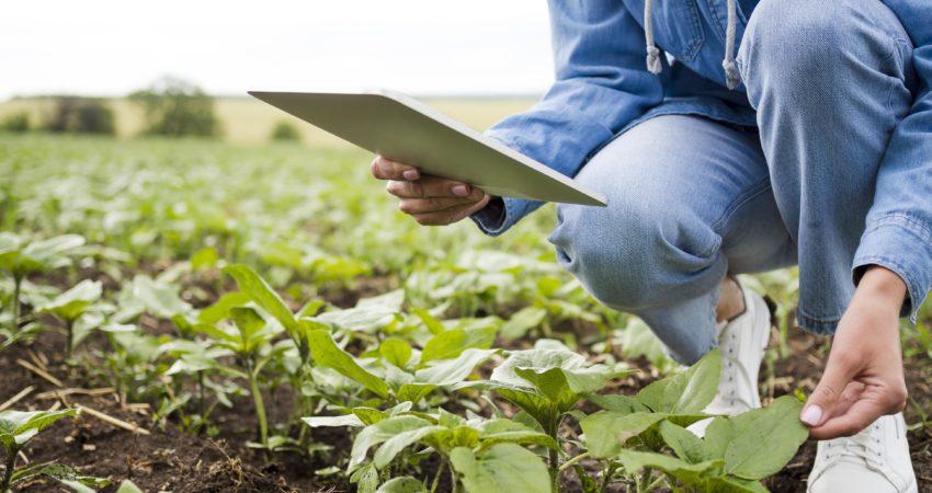 Azufre para la agricultura ecológica