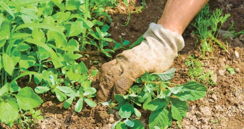 Eliminar las malas hierbas con herbicidas