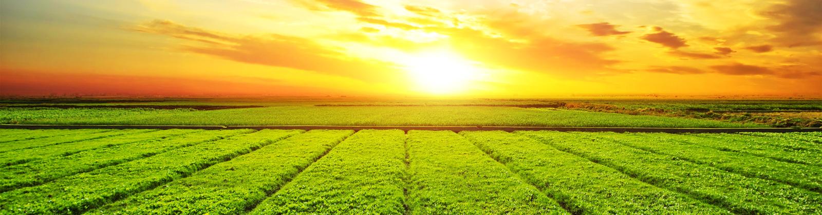 Beneficios del azufre - Productos AJF